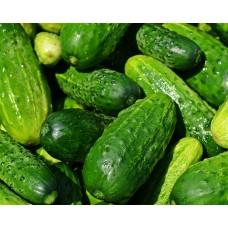 Cucumber 4-Pack