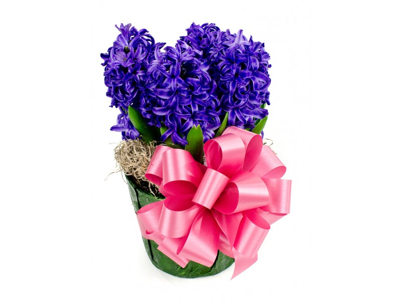 """As You Wish Floral Design Early Spring Wedding At The Hy: Hyacinth 6"""" Strange's Florists, Greenhouses & Garden"""