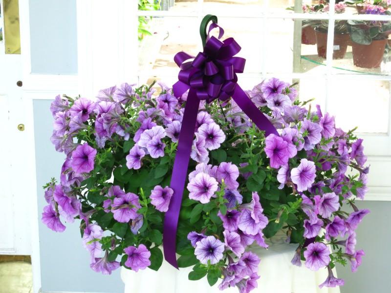 Petunia Hanging Basket 10 Strange S Florists Greenhouses