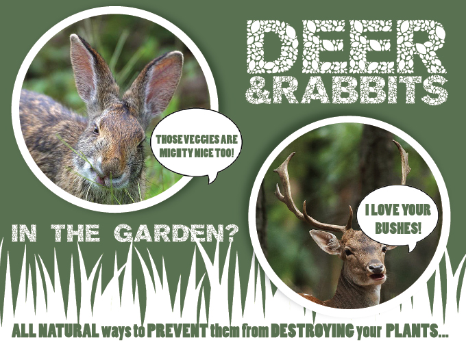 Stop Deer Rabbits From Chomping Your Plants Strange 39 S Florists Greenhouses And Garden