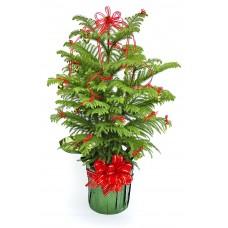 Decorated Norfolk Island Pine