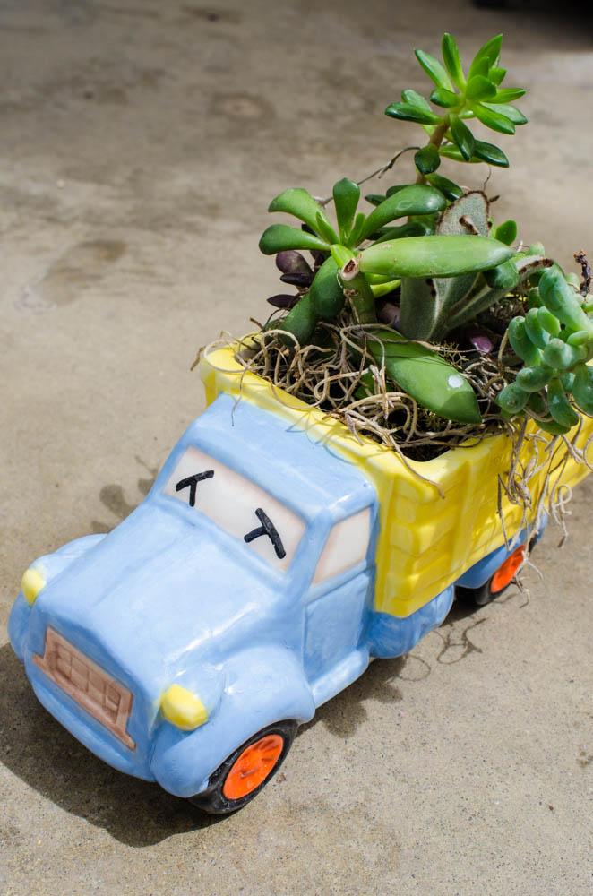 succulents in a truck