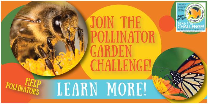 Pollinator Challenge