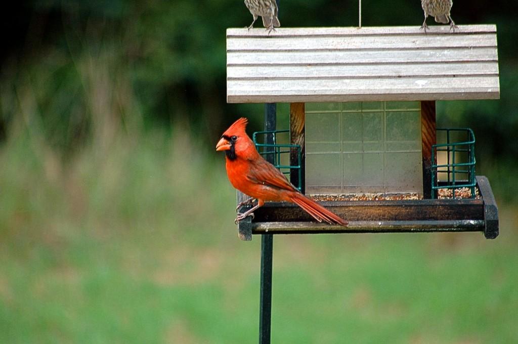 cardinal FREE