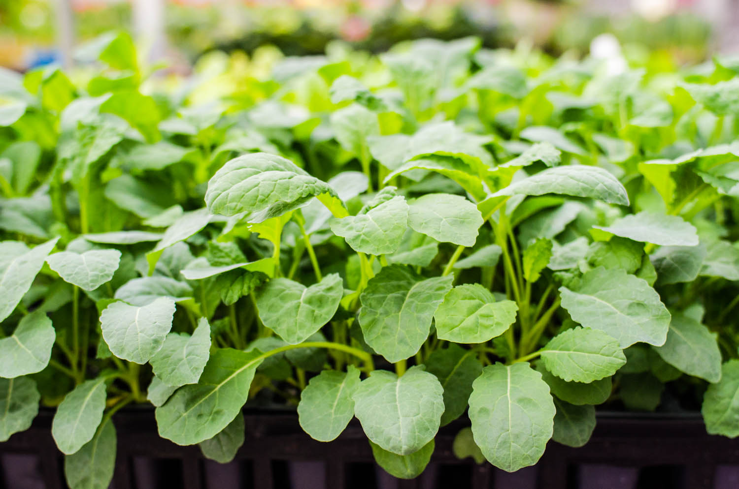 Cover Your Tenders What This Means For Spring Gardening Stranges