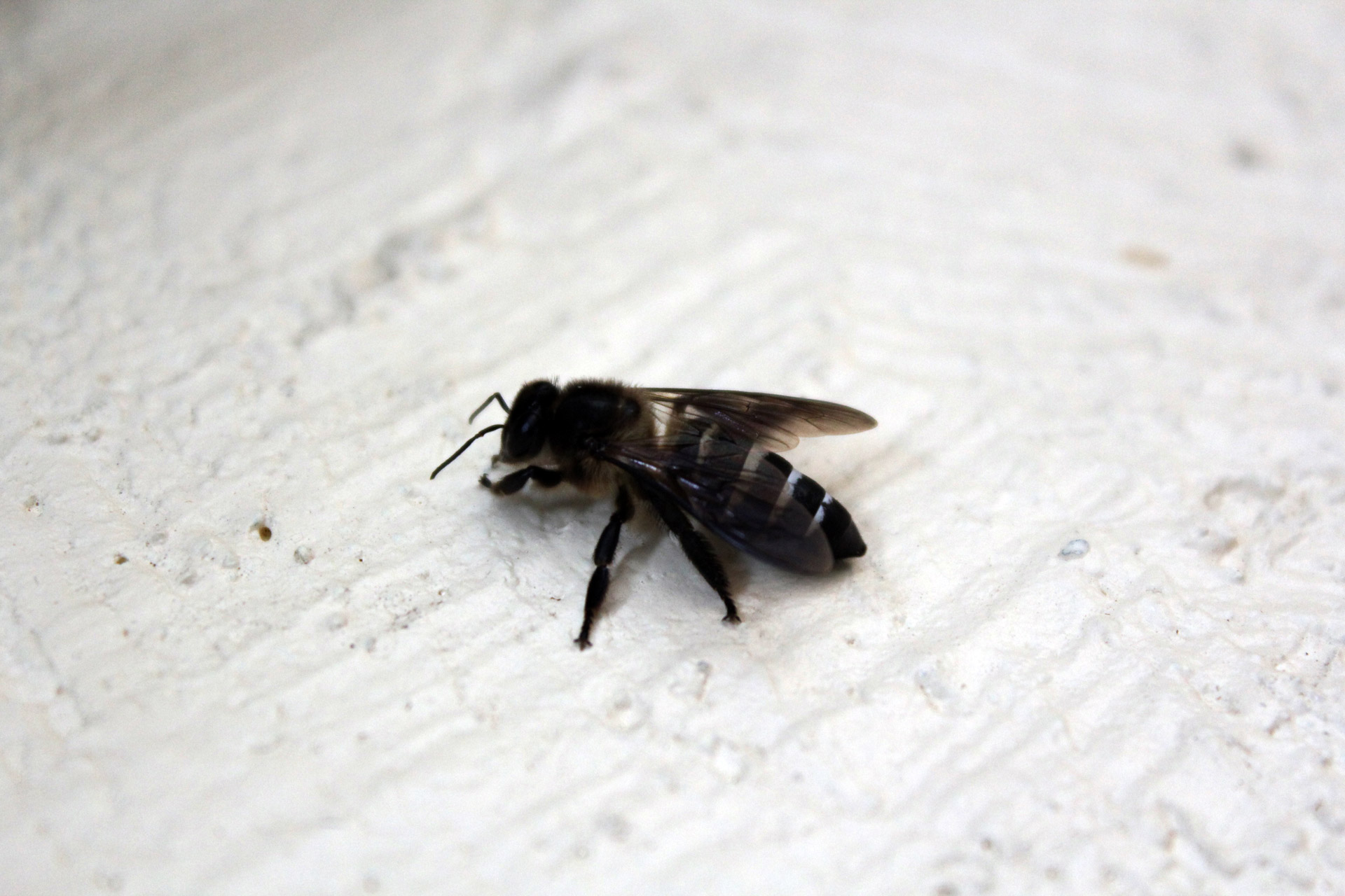 How To Stop Carpenter Bees From Destroying Your Wood