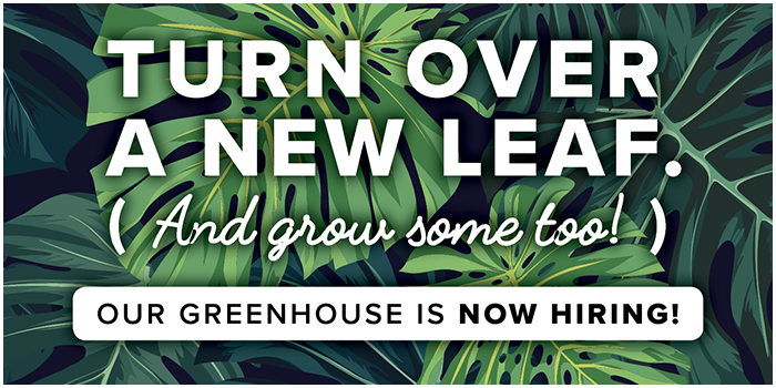 GreenhouseNowHiringWebBanner