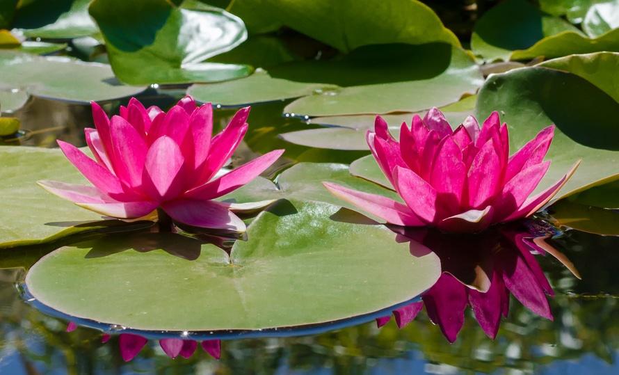 water-plant-leaf-pond-large