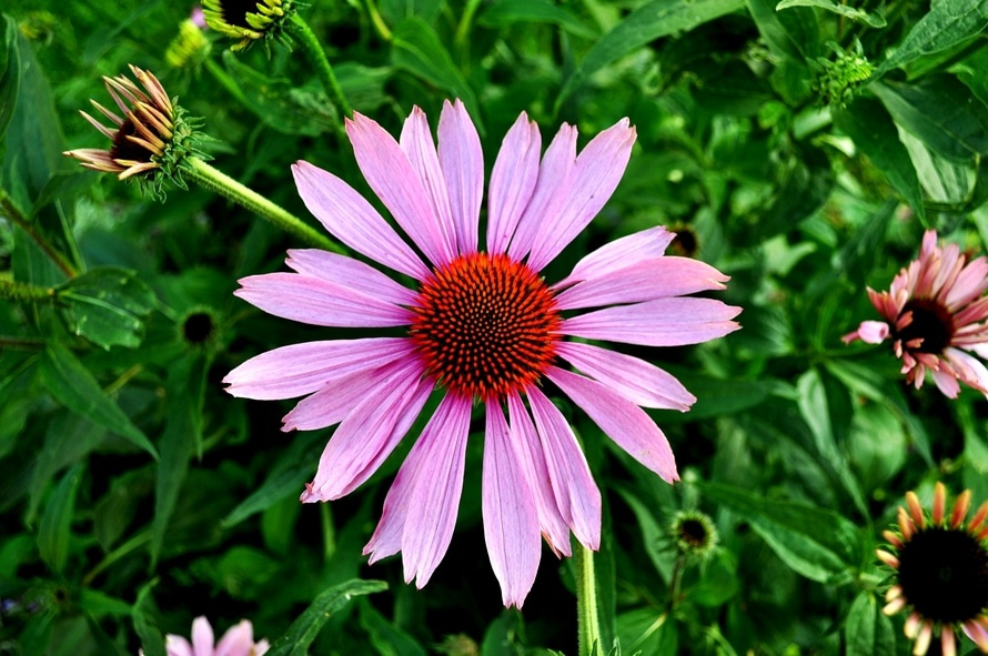 flowers-garden-plant-pink-large-FREE