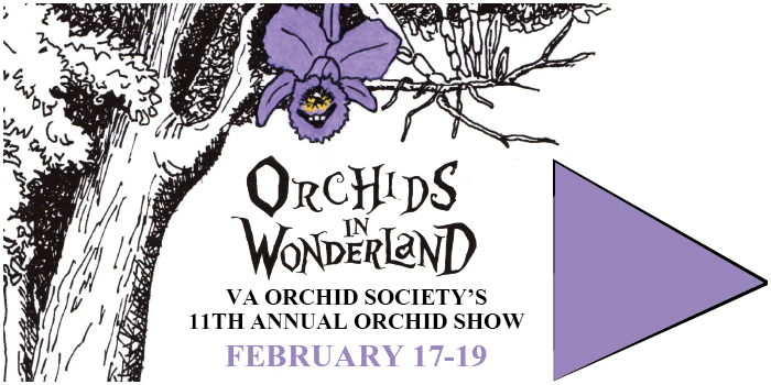 Orchid-Show-2017
