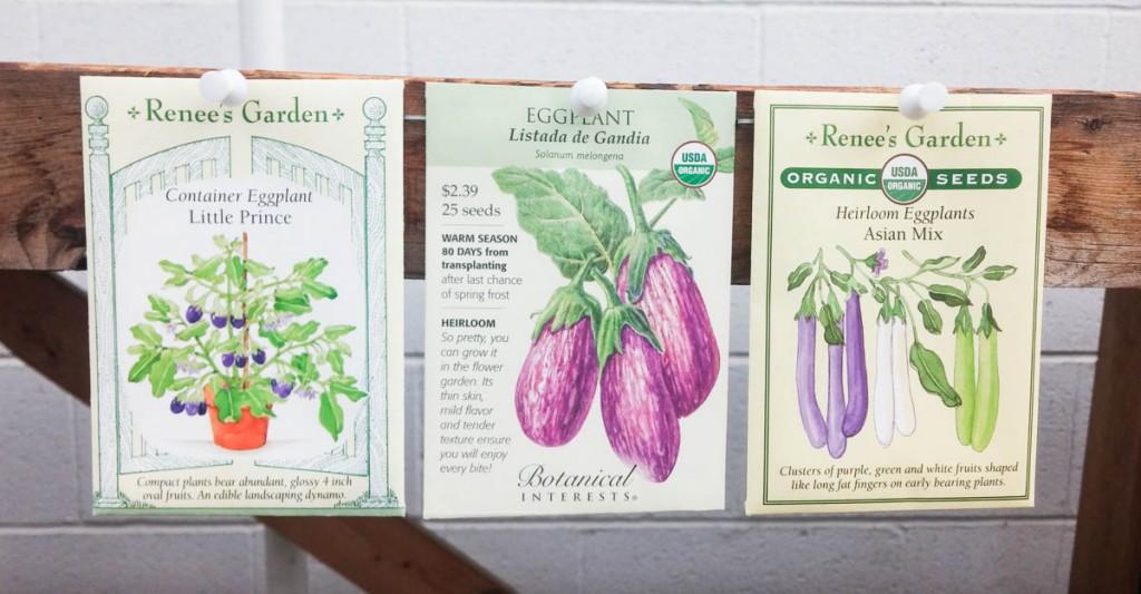 eggplant-seeds-2