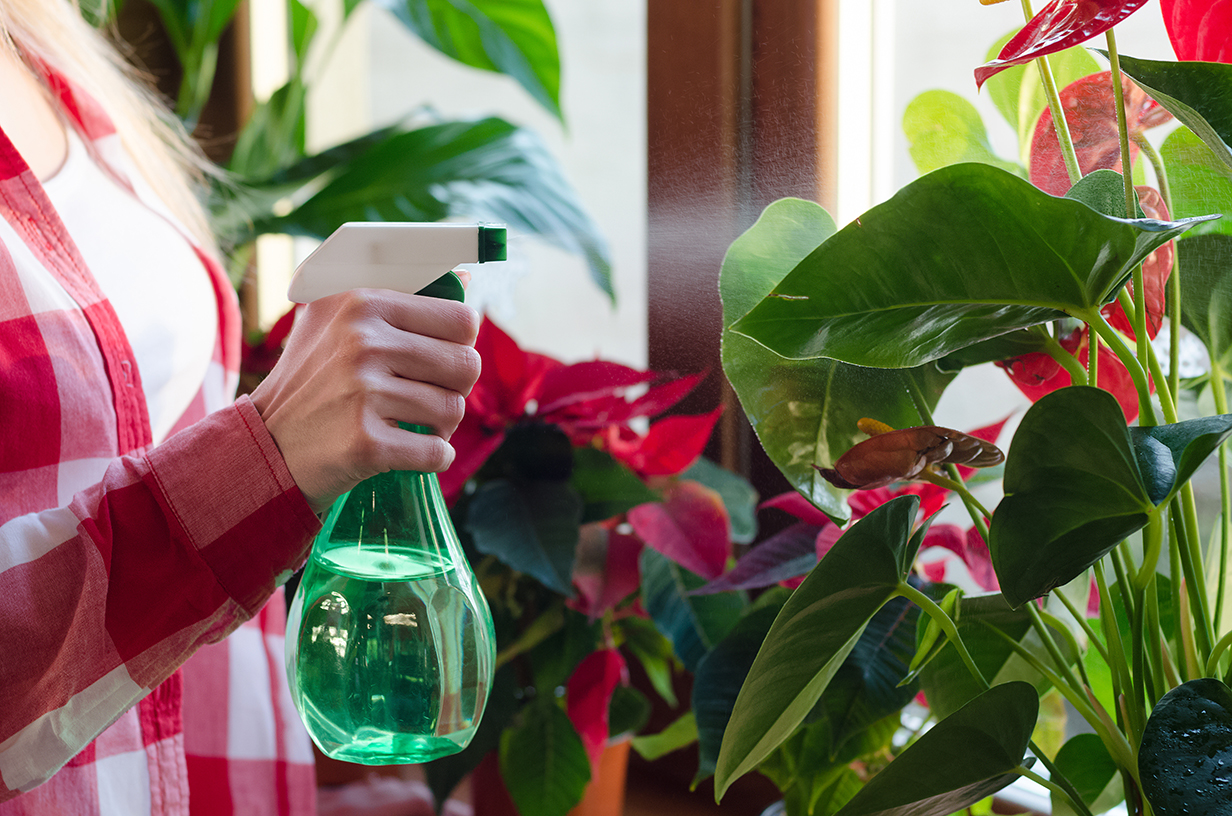 Lady spraying houseplant with water