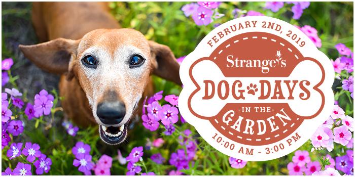 Dog Days in the Garden 2019 - Strange's Florists