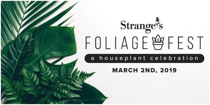 FoliageFestWebBanner